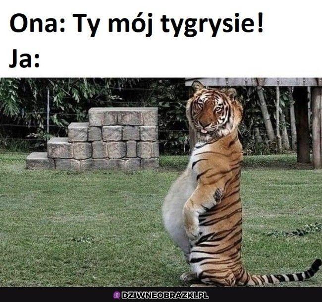 Typowy polski tygrys