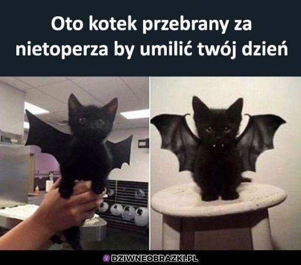 Gotowy na halloween