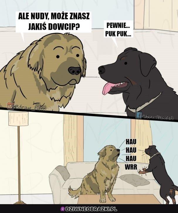 Psi dowcip