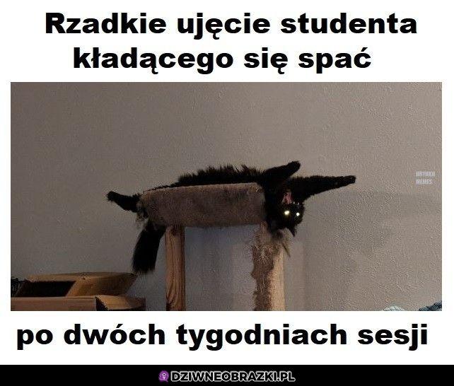 Student po sesji