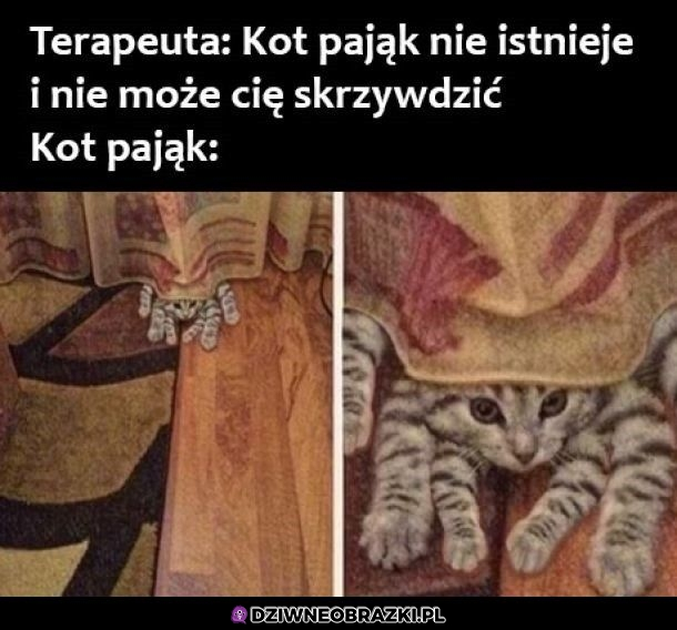 Kot pająk