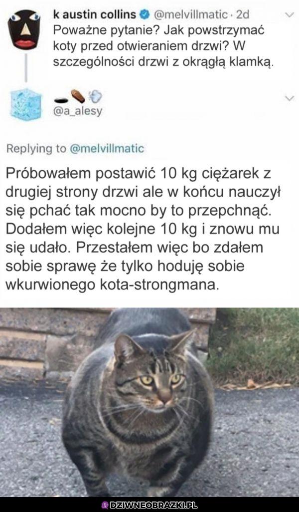 Jak powstrzymać kota