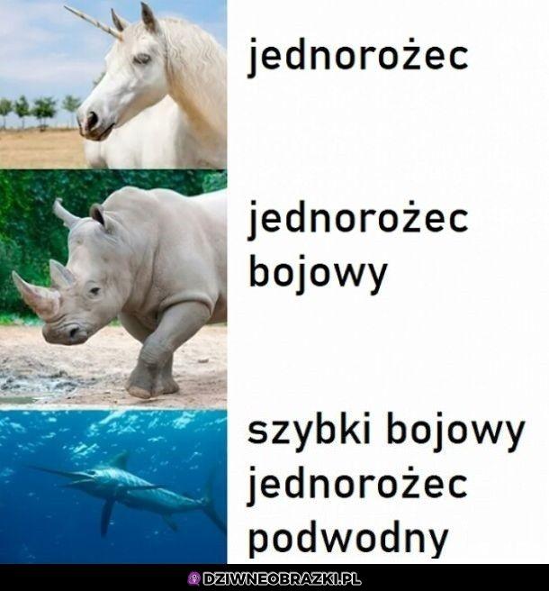 3 rodzaje