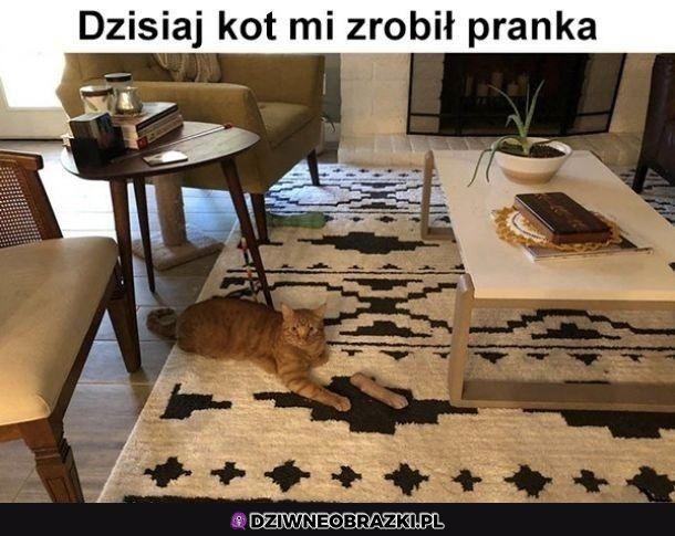 Bardzo śmieszne kocie