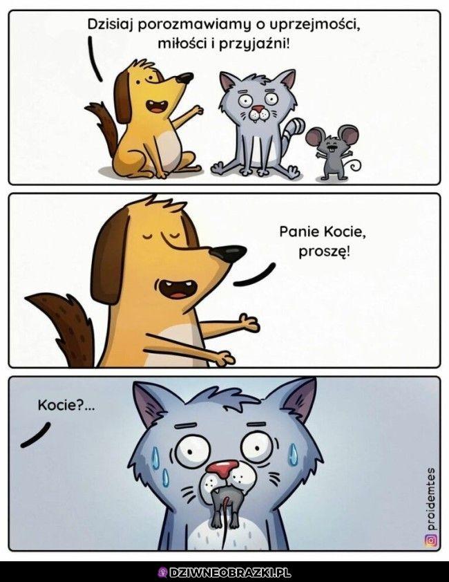 Kocie
