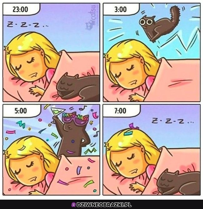 Noce z kotami takie są