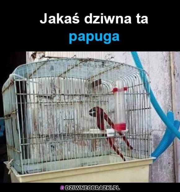 Dziwna papuga
