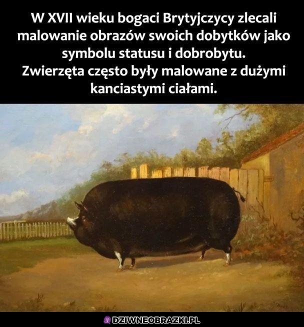 Kawał świniaka